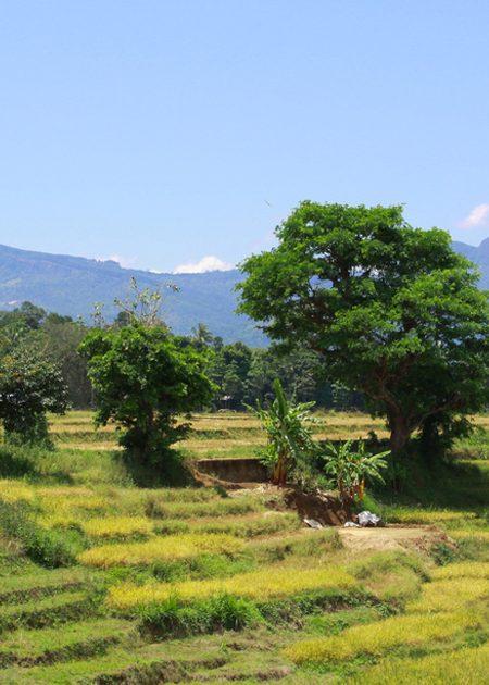 Alienation of Lands by the Mahaweli Authority