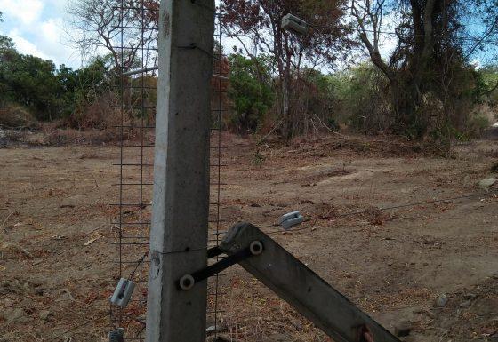 Ehetuwewa Forest Clearing