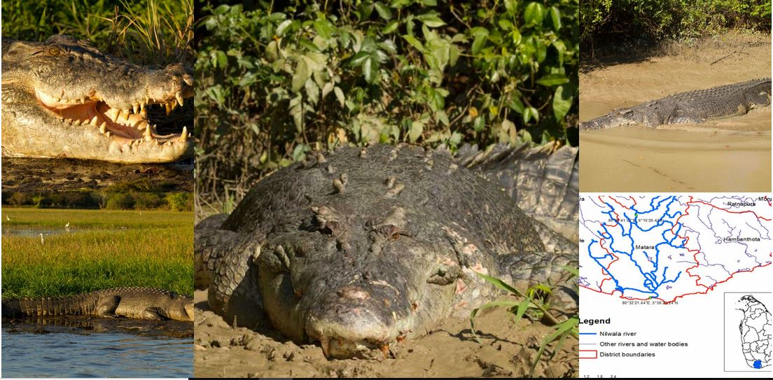 Mitigating the Human-Crocodile Conflict in the Nilwala River