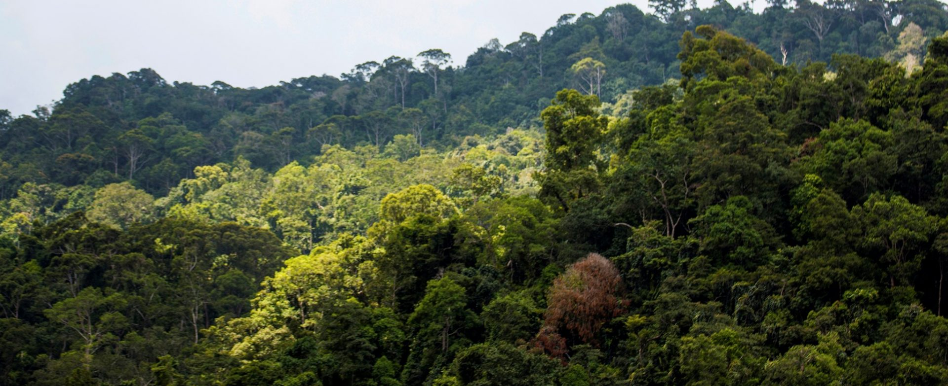 Save Our Forests to Save Our Future – A Message from EFL Chairperson