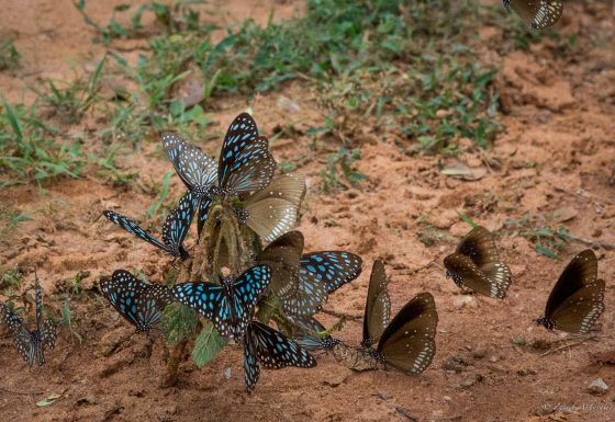 Value Sri Lanka's Biodiversity and Ecosystem Services